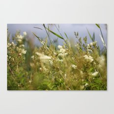 Meadow II Canvas Print