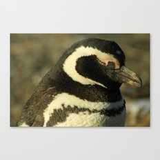Penguin of Magellan Canvas Print