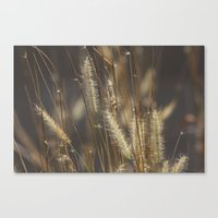 Blowing in the wind. Canvas Print
