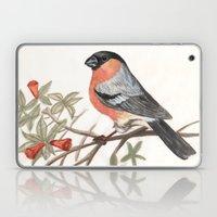 Eurasian Bullfinch Bird Laptop & iPad Skin