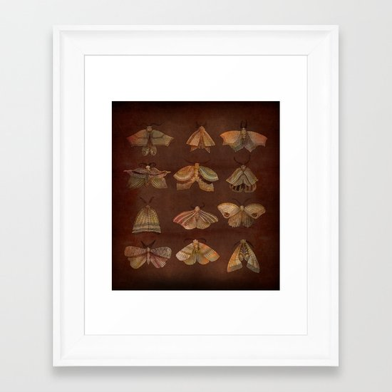 Moth Collector Framed Art Print