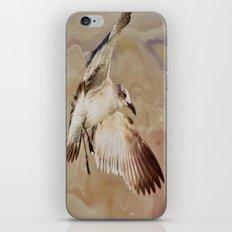 Seagull Swirl iPhone & iPod Skin