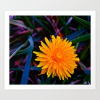Art Print featuring Dandelion of All Colors by morningowl