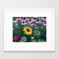 Solo Sunflower Framed Art Print