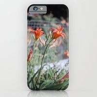 Day Lilies iPhone 6 Slim Case