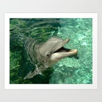 Smiling Dolphin Art Print