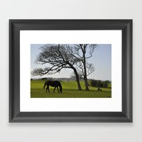 Lonely Horse Framed Art Print