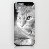 Classic Cat Clementine  iPhone 6 Slim Case