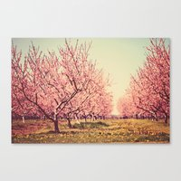 Springtime Dream Canvas Print