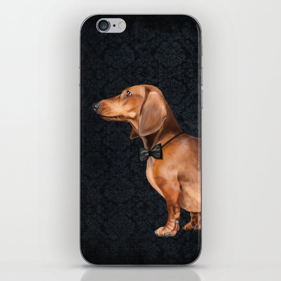 Portrait of an elegant dachshund. iPhone & iPod Skin