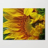 Inside The Sunflower Canvas Print