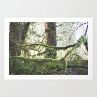 Forest Tree Jedediah Smith State Park  Art Print