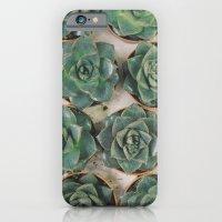 Succulent Collection iPhone 6 Slim Case