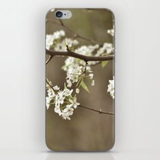 Spring Blossoms iPhone & iPod Skin