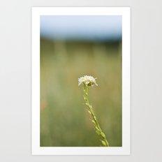 Flower in the Field Art Print