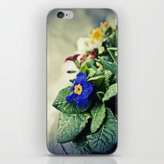 The Flower Pot iPhone & iPod Skin