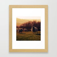Winter sheep Framed Art Print