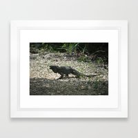 Blue Iguana Framed Art Print
