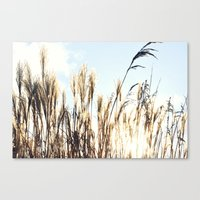Sun Setting On Reeds Canvas Print