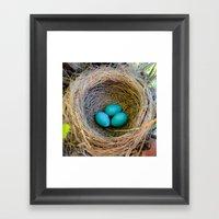 Three Little Robin's Egg… Framed Art Print