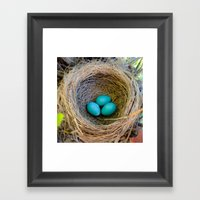 Three Little Robin's Eggs Framed Art Print