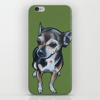 Artie The Chihuahua iPhone & iPod Skin