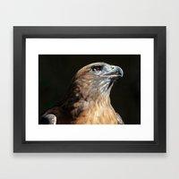 Serious Red Hawk Framed Art Print