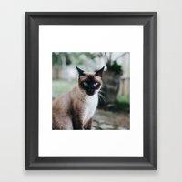 Blue-eyed Cat Framed Art Print