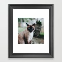 Blue-eyed Cat Framed Art Print