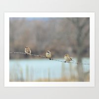 Birds On The Barb Wire Art Print