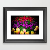 Tulip Festival In Woodbu… Framed Art Print