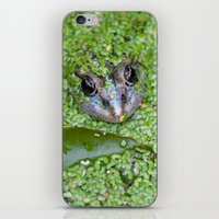 Frog's Eyes 0473 iPhone & iPod Skin