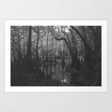 Florida Swamp Art Print