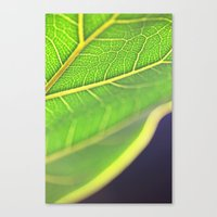 Clever Canvas Print