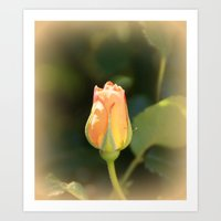 Sunshine Rosebud Art Print