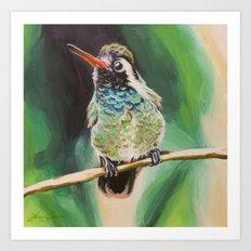 White-Eared Hummingbird Art Print