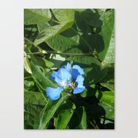 MuttonBird Canvas Print