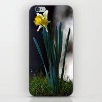 Daffodil iPhone & iPod Skin