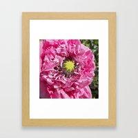 pink poppy macro XII Framed Art Print
