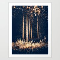 Tall Birches Art Print