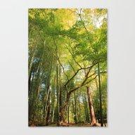 Greenish Tree Canvas Print