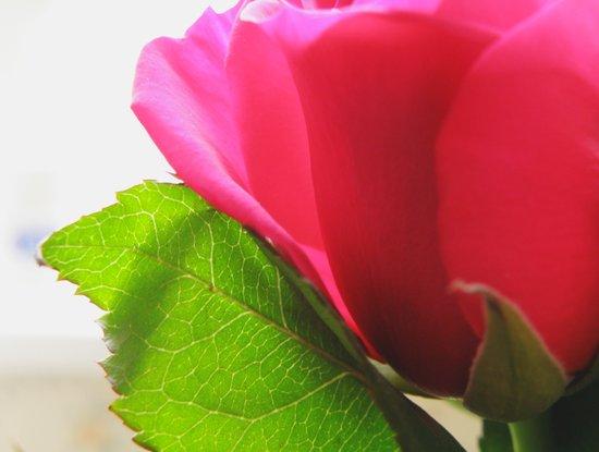 Pink Roses #5 Art Print