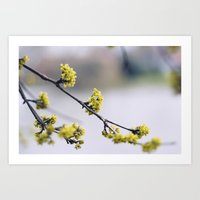 Every flower is a soul blossoming in nature Art Print