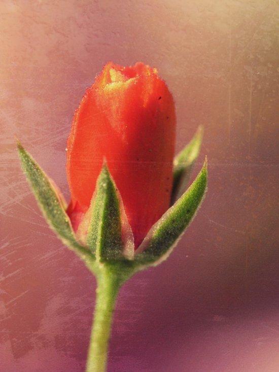 Florange Art Print