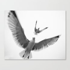 Seaguls {Eight} Canvas Print