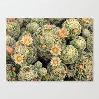 Pretty Prickly Canvas Print