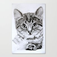 Kitten - Pencil on paper Canvas Print