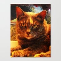 cat in bazaar Canvas Print