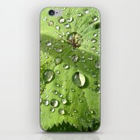 Alchemilla iPhone & iPod Skin
