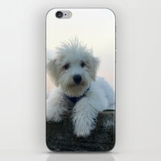 Teddy At Sunset iPhone & iPod Skin